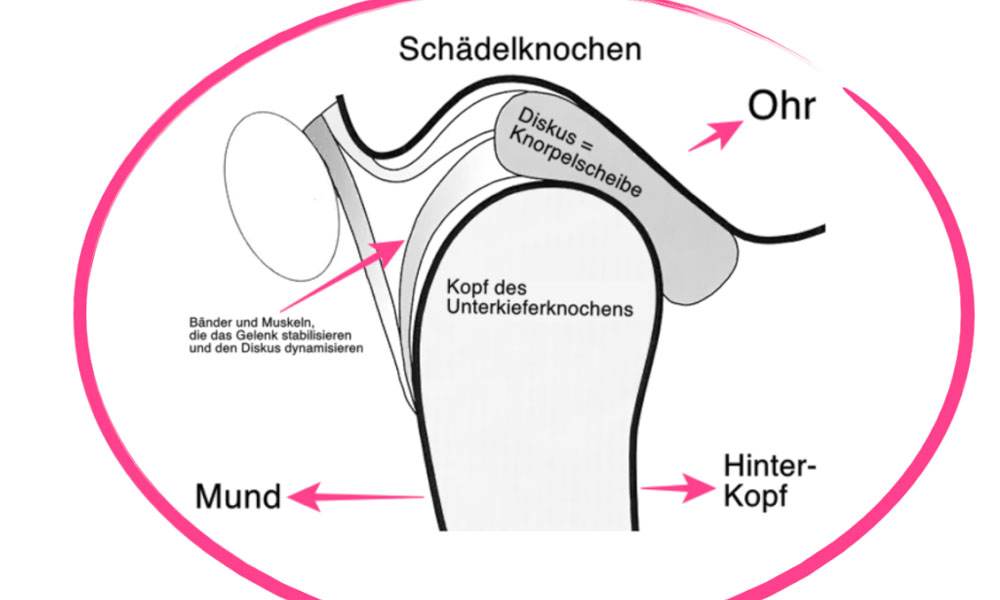 Die Anatomie des Kiefergelenks I #011