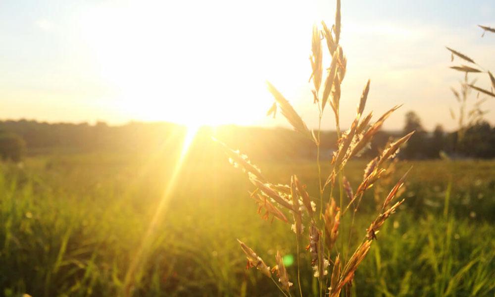 Vitamin D – Das Sonnenvitamin