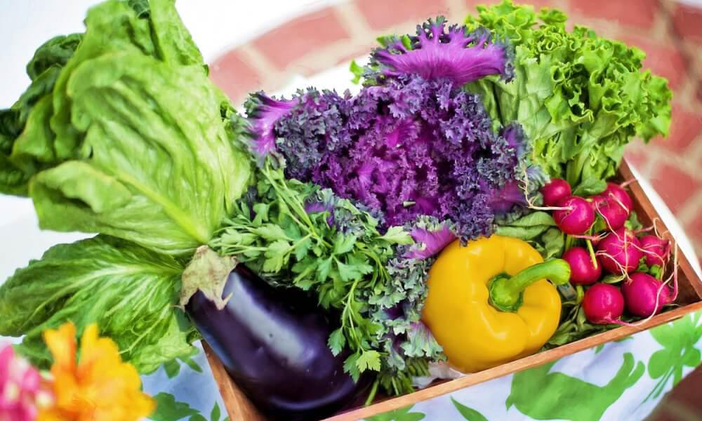 Krebszellen mögen kein Gemüse! Nahrungsmittel als Krebsprävention.